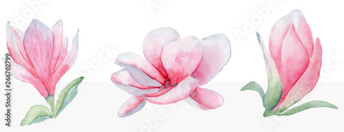 Pinturas sobre lienzo  Magnolia flowers set watercolor  illustration