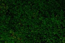 Green Of Fern Texture Background