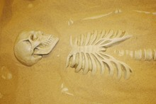 Archaeological Excavations Of Human Remains In The Sand. Skeleton And Skull Of Ancient Man.
