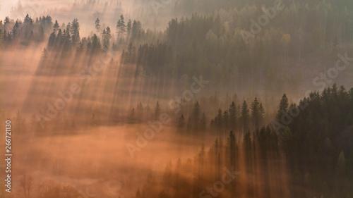 Montage in der Fensternische Herbst Rays of sun in the fog