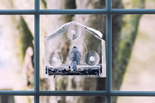 Back Of One Tufted Titmouse Perched On Plastic Window Bird Feeder With Suction Cups, Sunflower Seeds In Virginia
