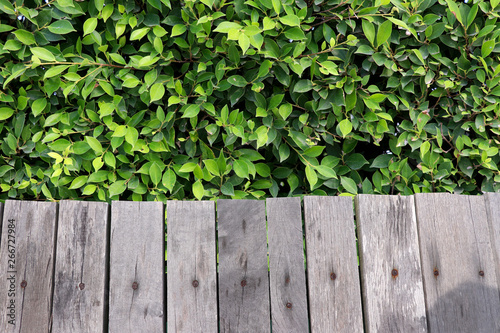 Old wooden fence with green tree walls. Canvas Print