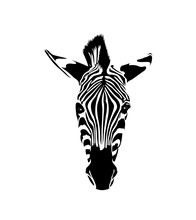 Zebra Head. Wild Animal Textur...