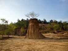 The Tree On The Earth Pillar W...