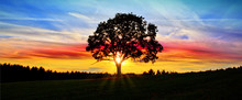 Colorful Sky With Sunset And Big Tree .. Abstract Background.