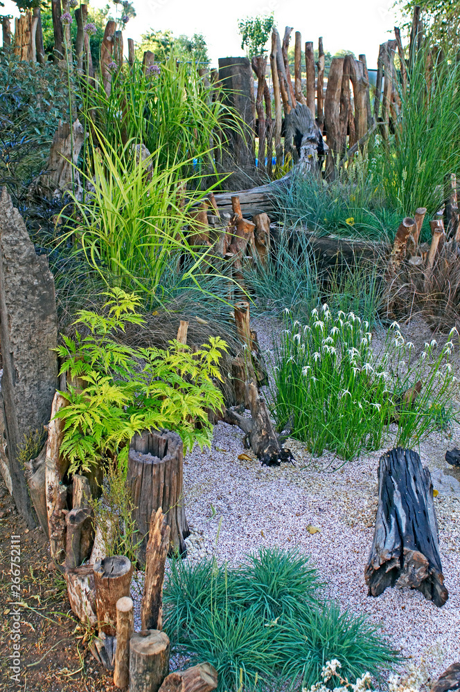 A relaxing seaside garden with 'Dichromena colorata' flowering among the grasses and reclaimed driftwood