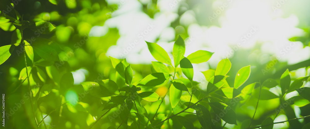 Fototapeta earth day and freshness environment conversation concept with sunshine on beauty green leaves in springtime and summer season with soft focus and bokeh background