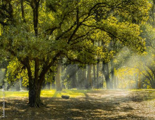 Billede på lærred camino en el bosque