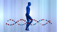 Human Model And DNA