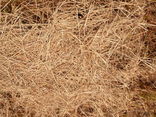 Hay Dry Texture Background