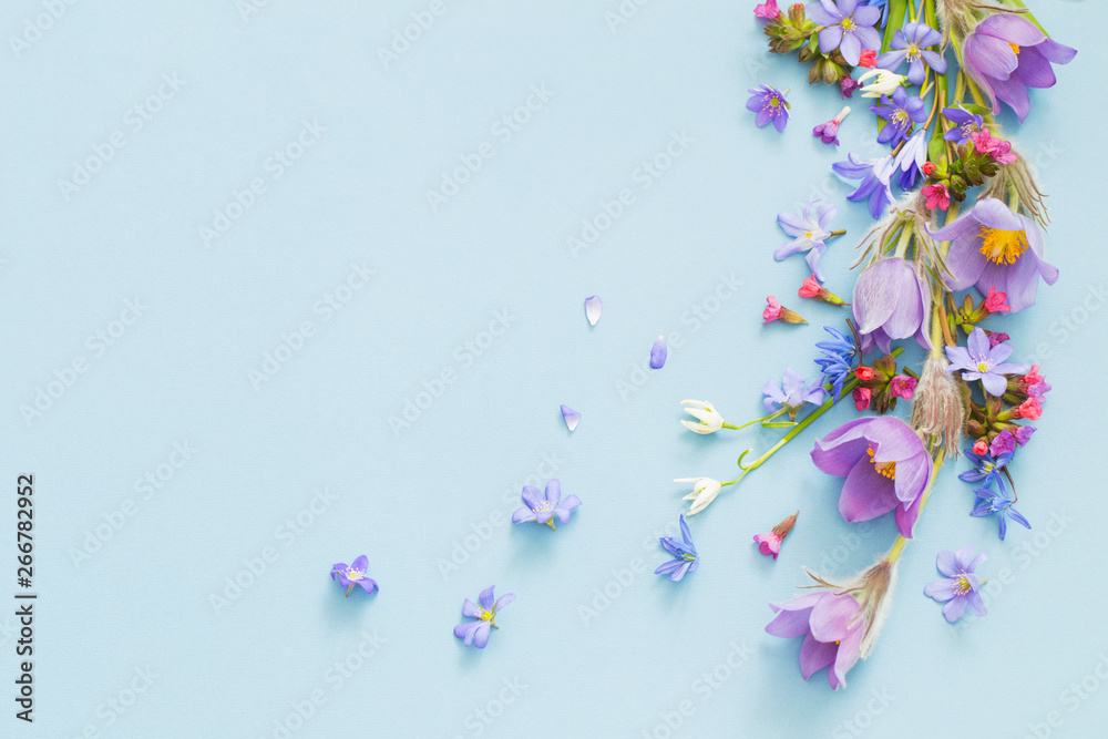 Fototapeta spring flowers on blue background