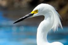 Mexico South Pacific Birds