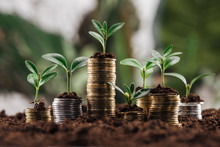 Silver And Golden Coins With Green Leaves And Soil, Financial Growth Concept