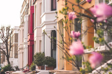 Magnolia In Notting Hill London