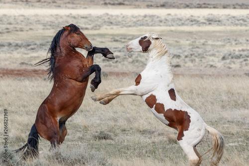 Wild Stallions in battle Canvas-taulu