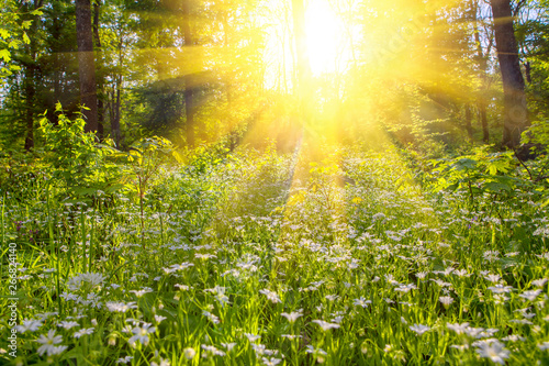 Poster Jardin sunrise in the green forest