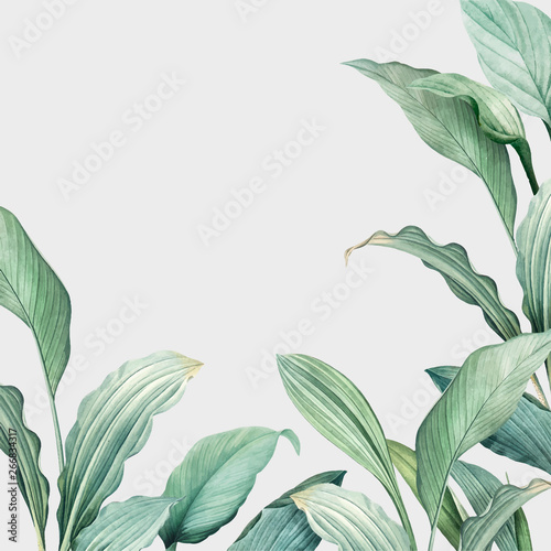 Cuadros en Lienzo Tropical leaves background