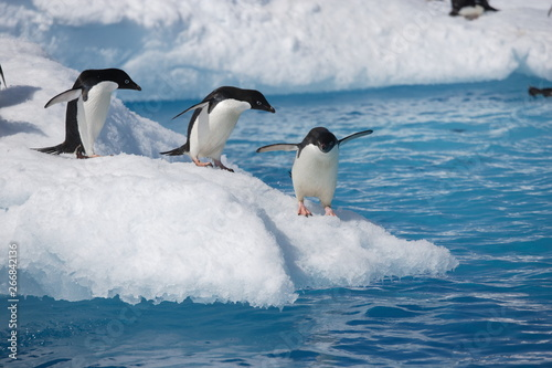 Spoed Fotobehang Pinguin Adelie penguins head to the ocean on an Antarctic iceberg