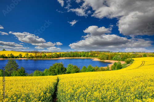In de dag Meloen flowering of rapeseed in the Warmian-Masurian Voivodeship in Poland