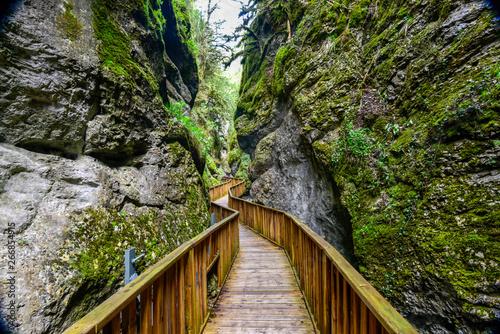 Photo sur Toile Route dans la forêt foot path in the canyon