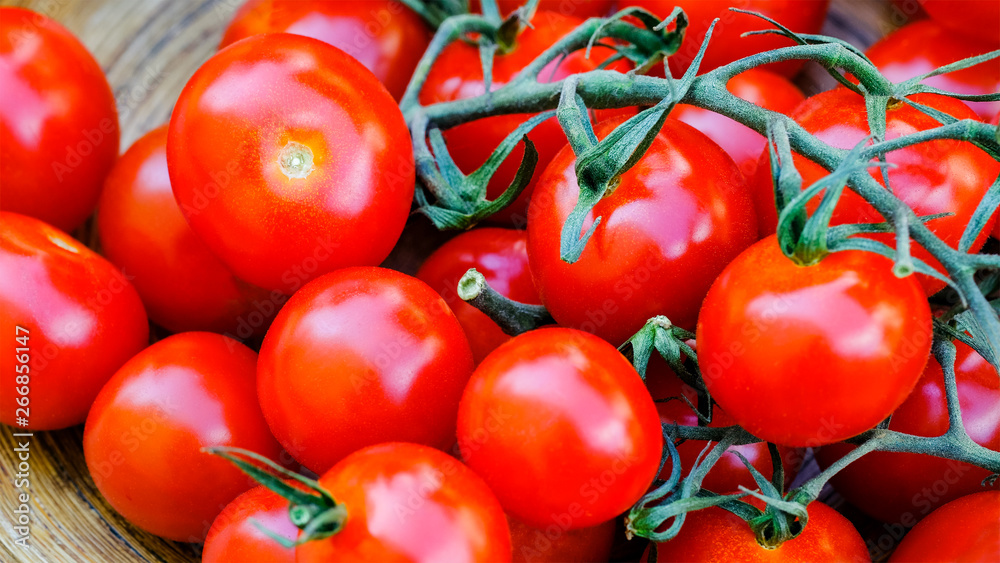 Fototapety, obrazy: Trusses of tomatoes macro view. Fresh antioxidant rich cherry tomatoes bunch. Trinomial name for this vegetable is Solanum lycopersicum
