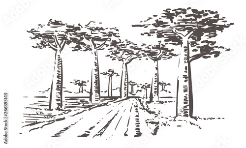 Valokuvatapetti Road through baobab trees, Madagascar