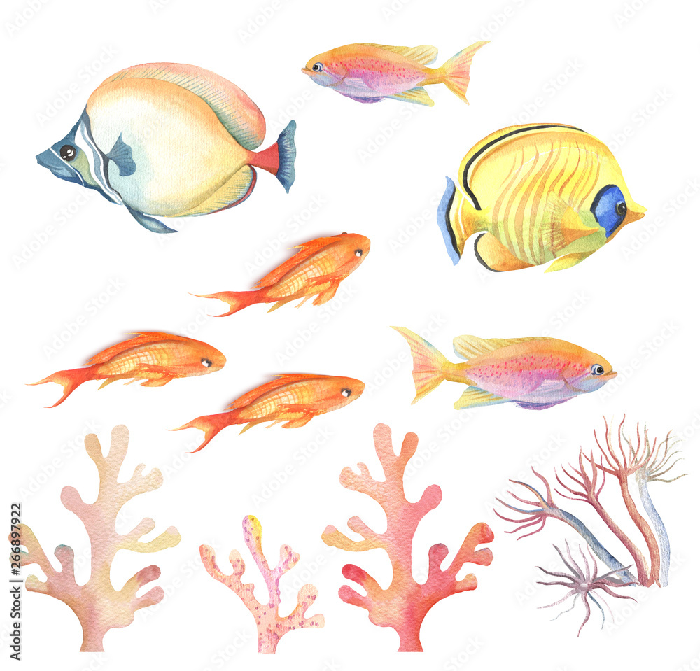 Fototapety, obrazy: Set of colorful tropical fish on white background