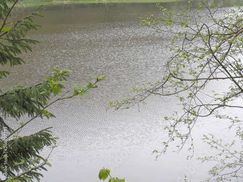 Photo Stands Lily of the valley tree in water
