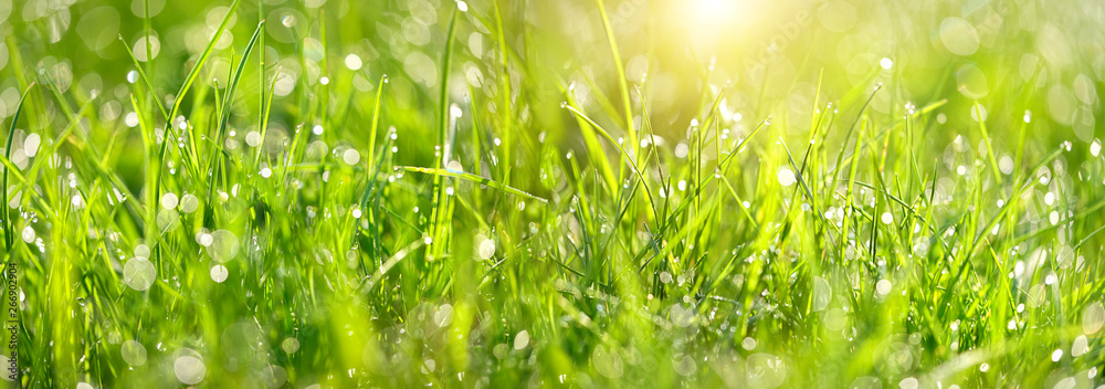 Fototapety, obrazy: Abstract green grass nature landscape in summer sun with bokeh. Juicy green grass on meadow with drops dew in morning light in outdoors close up. Beautiful artistic image of purity freshness nature