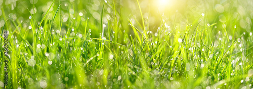 Foto op Plexiglas Weide, Moeras Abstract green grass nature landscape in summer sun with bokeh. Juicy green grass on meadow with drops dew in morning light in outdoors close up. Beautiful artistic image of purity freshness nature