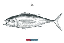 Hand Drawn Tuna Fish Isolated....