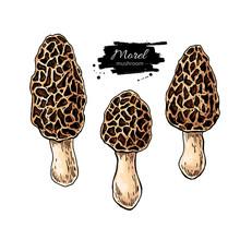 Morel Mushroom Hand Drawn Vect...
