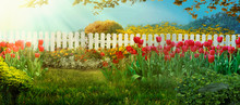 Spring Garden. Red Tulips In Garden
