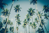 Coconut palm trees in sunset light. Vintage background. Retro toned poster. - 266935119