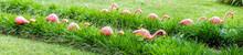 Tacky Pink Flamingos Lining Pa...