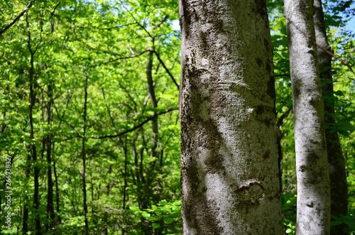 Montage in der Fensternische Grun Spring beech forest with fresh light green foliage