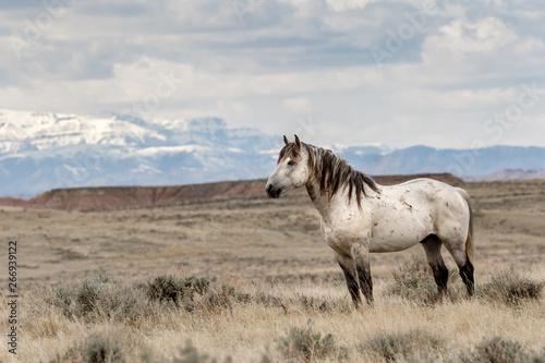 Wild Horses of McCullough Peaks