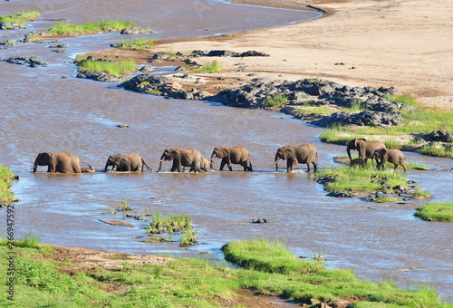 Door stickers Elephant elephant crossing Olifant river in Kruger national park in SOuth Africa