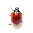Leinwandbild Motiv Ladybug isolated on white