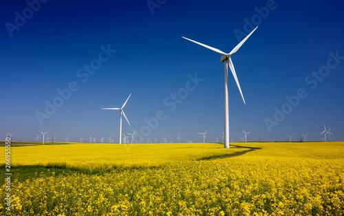 Spoed Fotobehang Meloen Wind turbines on fields with windmills in the Romanian region Dobrogea. Rapeseed field in bloom. Renewable energy. Protect the environment.