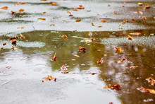 Autumn Leaves In The Puddle Of Water On The Asphalt During Rain_