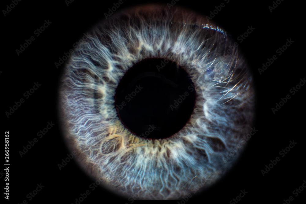 Fototapeta Iris Auge blau vor schwarzem Hintergrund