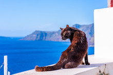 A Black Cat Sitting On White Wall In Oia With Sea Behind - Closeup With Selective Focus. Stray Cats In Santorini, Greece