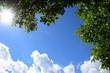 Grüne Walnussblätter - blauer Himmel - Wolken und Sonnenschein