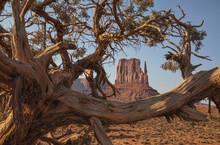 Monument Valley Rocks & Tree