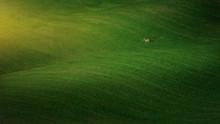 Landscape Of Majestic Green Fi...