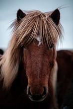 Beautiful Horses Outdoors In I...