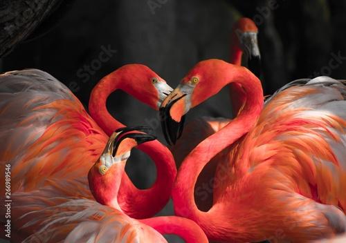 Garden Poster Flamingo Flamingo Love