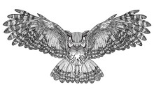 Flying Owl With Large Wings. ...