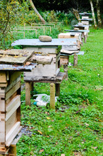 Number Of Ramshackle Bee Hives